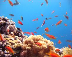 Capodanno Mar Rosso